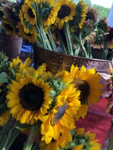 Sunflowers in vases for sale